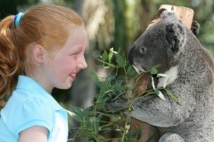 Hugging a Bear at Featherdale Wildlife Park. Source : http://www.blacktownaustralia.com.au/directory_details.asp?ID=1658